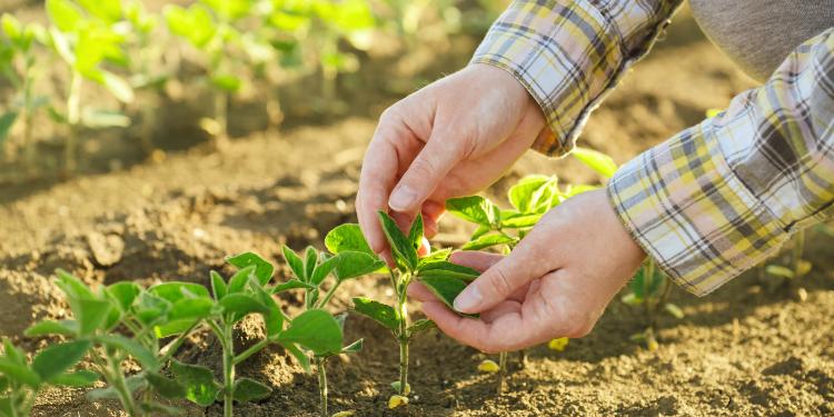 aliar agronegócio e sustentabilidade
