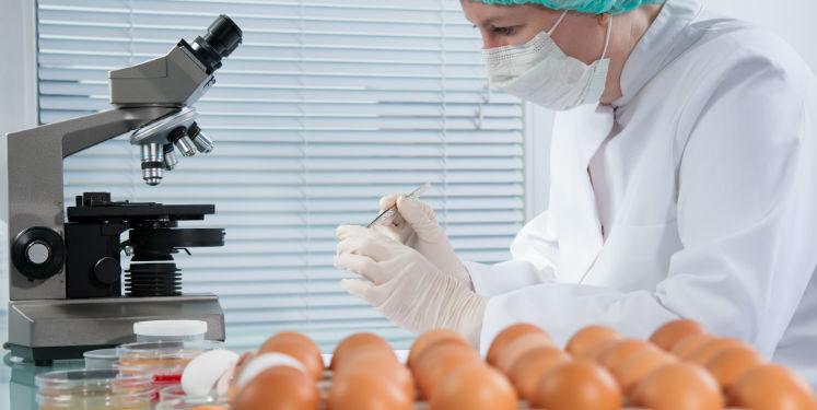 produção de ovos férteis