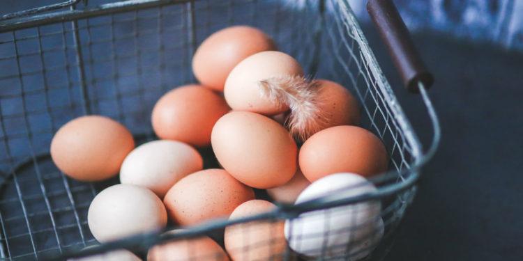 produção de frango