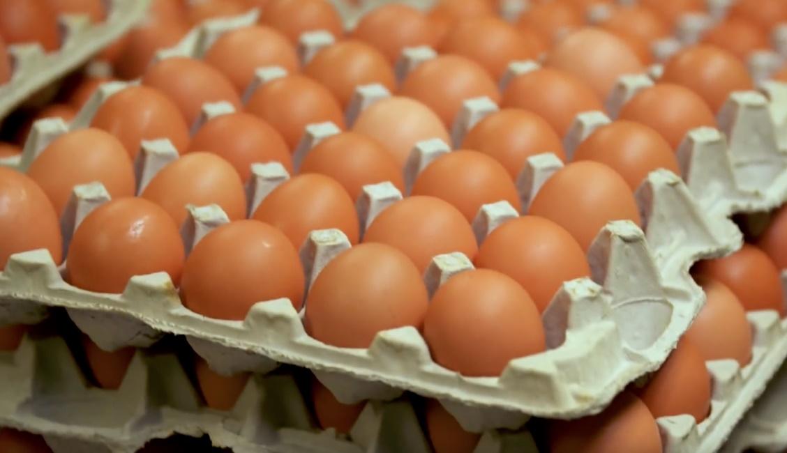 A importância da biosseguridade na produção de ovos saudáveis e na certificação da competitividade do mercado