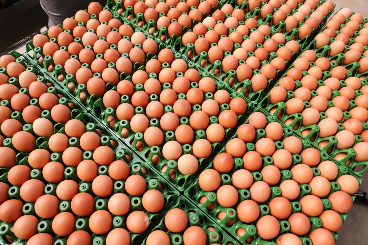 Embarques brasileiros de ovos crescem em 2021